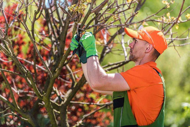 Tree-pruning-richmond